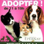 Adoption au Refuge d'Epernay